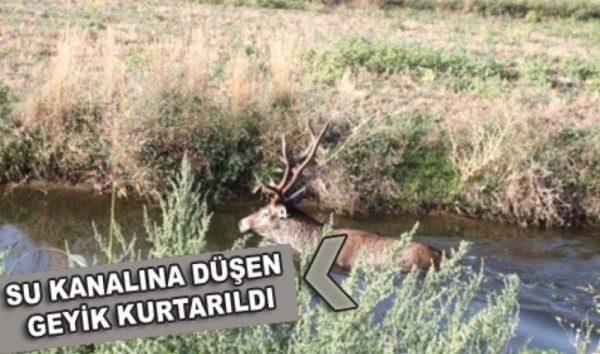su-kanalina-dusen-geyik-kurtarildi-2-20161011110729