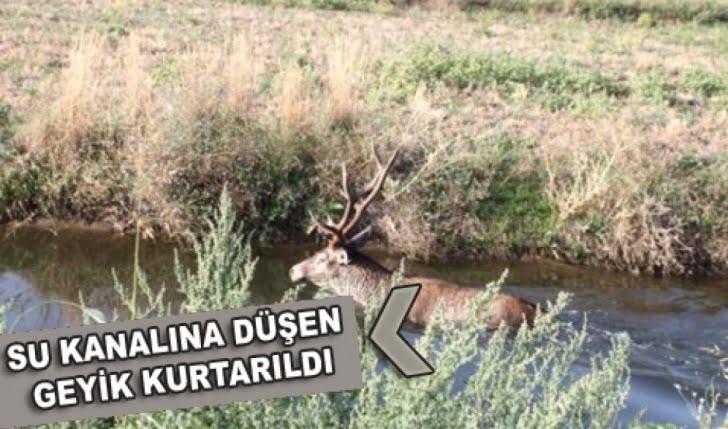 Mengen'de Su kanalına düşen geyik kurtarıldı