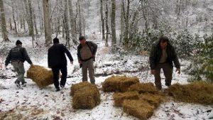 Yaban hayvanları için ormanlık alanlara yem bırakıldı