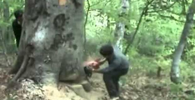 Ağaç keserken hayatını kaybetti