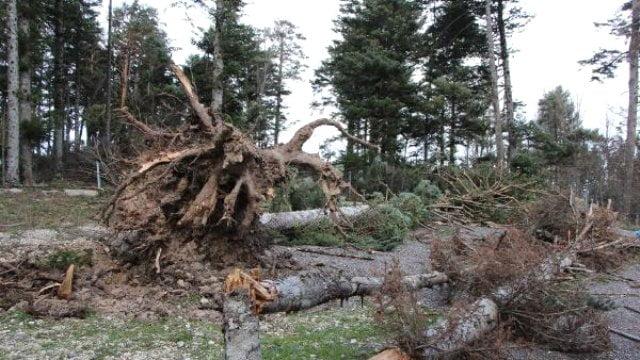 Mengen'de lodostan bin 640 ağaç devrildi